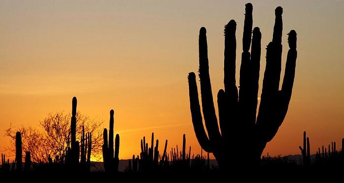 1024px-Sonoran_desert_sunset-CC-Tomas-CastelazoSMALL