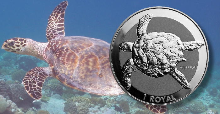 BIOT-sea-turtle-header