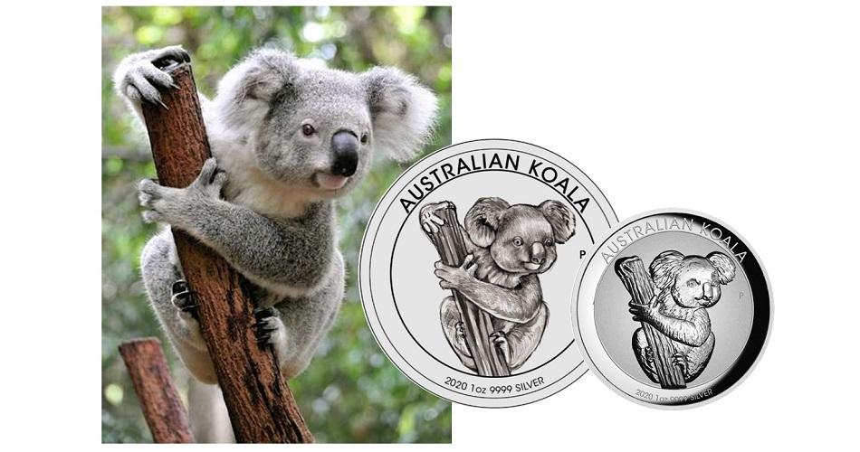 australian-koala-2