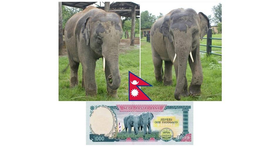 nepal-banknote-design